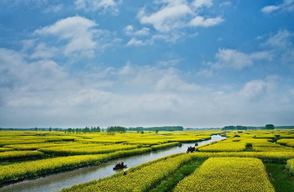 """""""兴化千岛菜花""""位于兴化市缸顾乡,一条条的小河又分支出一条条的小沟"""